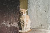 Stray Sad Ginger Cat On Street Looking At Camera. Close-up Homeless Abandoned Cat Portrait poster