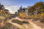 Footpath Through Heathland In Yellow Autumn Colors On An Evening In November. Gasteren, Drenthe, The poster