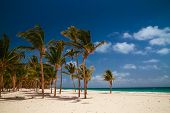 Caribbean Wild Nature Scenery Near The Beach In Punta Cana. Amazing Tropical Beach With Palm Tree En poster