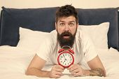 Waking Up Early Gives More Time To Prepare And Be Timely. Hipster Bearded Man Lay In Bed With Alarm  poster