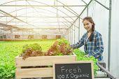 Organic Vegetable Farm, Business Farmer, Healthy Food Concept,fresh From Farm Text Hand Drawn On Bla poster