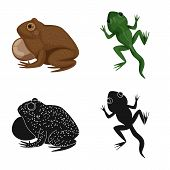 Vector Illustration Of Wildlife And Bog Icon. Collection Of Wildlife And Reptile Stock Symbol For We poster