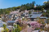 Sakura Blooming At Miyajima Island, Japan poster