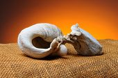 Closeup of the inner ear bone of a California Gray Whale. Bone is resting on a burlap surface with a