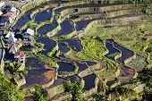 picture of ifugao  - The world heritage Rice terraces in Batad northern Luzon Infugao province Philippines - JPG