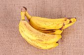 foto of festering  - Bunch of over ripe bananas on sackcloth background - JPG