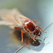 image of ant-eater  - close up little insect termite white ant - JPG