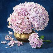 Постер, плакат: Pink hydrangea flowers