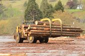 stock photo of wheel loader  - large wheeled front end log loader working the log yard at a lumber processing mill that specializes in small logs - JPG