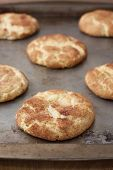 image of snickers  - Snicker Doodle cookies on a cookie sheet sitting on a counter - JPG