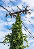 foto of mast  - Mast electrical voltage  - JPG