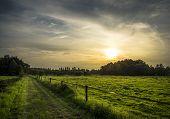 image of wonderful  - A green road - JPG