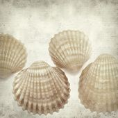 foto of cockle shell  - textured old paper background with cockle shells - JPG