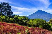 foto of volcanic  - Flowering hillside  - JPG