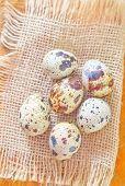 stock photo of quail  - quail eggs - JPG
