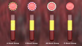 picture of red blood cells  - A blood type  - JPG