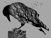 pic of raven  - Double Exposure of raven and background trees with birds - JPG