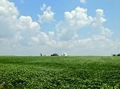 image of soybeans  - Mobile phone image of a midwestern soybean field in summer, with puffy clouds and silo and barn on the horizon.