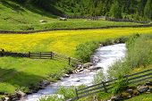 stock photo of feedlot  - nice outdoor photo from a river and flowers  - JPG