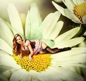 foto of pixie  - Beautiful sexy woman pixie with wings lies on a daisy flower at summer - JPG