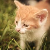 picture of baby cat  - closeup picture of a baby cat looking away while standing in the grass - JPG