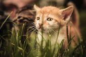 pic of baby cat  - sad baby cat looking away while standing in the grass - JPG