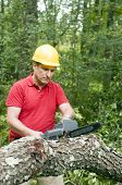 image of arborist  - arborist tree surgeon wearing protective hard hat helmett using chain saw to cut fallen tree - JPG