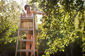 pic of apple orchard  - Young woman up on a ladder picking apples from an apple tree on a lovely sunny summer day  - JPG