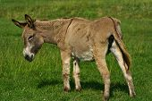 image of feedlot  - An image of a funny donkey in a sunny meadow - JPG