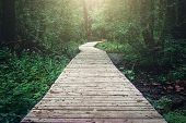Wooden Pathway Through Forest Woods In The Morning. Summer Nature Travel And Journey Concept, Toned poster
