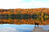 stock photo of dock a pond  - Dog stands on dock and looks upon