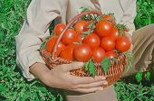 Wicker Basket Full Of Healthy Organic Red Tomatoes poster