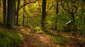 Autumn Walk Through Morralee Wood, At Allen Banks And Staward Gorge In The English County Of Northum poster
