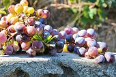 Bunches Of Fresh Ripe Red Grapes On A Wooden Textural Surface. Ancient Style, A Beautiful Background poster