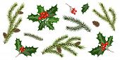 Set With Fir Tree Branches And Holly Berries, Isolated On White Background. Design Elements For Chri poster