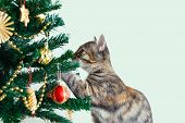 Little Gray Kitten Plays With Christmas Balls On The Christmas Tree. White Background. poster