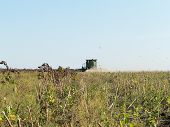 Mechanized Harvesting Sunflower. Mature Dry Sunflowers Are Ready For Harvest. Bad Harvest Of Sunflow poster