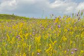 Blurred Background, Summer Meadow Landscape Blooming With Wild Flowers, Yellow Lilac Green. Bright B poster