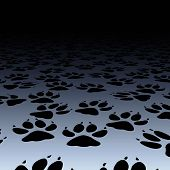 pic of paw-print  - Editable vector design of dog paw prints on a floor - JPG