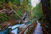 Picturesque View Of Vintgar Gorge (bled Gorge) With Radovna River. Trail Runs Across The Gorge And T poster