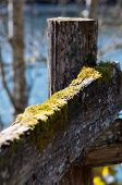 Green Moss On Split Rail Fence With A River In The Background.  Intentionally Blurred For Artistic E poster