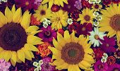 Floral Summer Composition, Backdrop For Greetings Or Cards, Top View. Toning. Different Garden Flowe poster