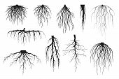 Tree Roots Silhouettes Isolated On White, Vector Set Of Taproot And Fibrous Root Systems Of Various  poster