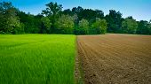 image of rich soil  - Newly ploughed wheat field in Italy half and half - JPG