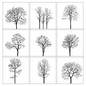 Set Of Nine Trees On A White Background