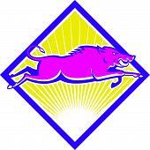 image of razorback  - Illustration of a wild pig boar razorback jumping on isolated background done in retro style set inside diamond shape - JPG