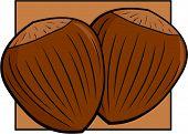 picture of cobnuts  - hazelnuts - JPG
