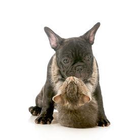 picture of little puppy  - puppy love  - JPG