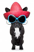 picture of mexican-dog  - french bulldog with a red mexican sombrero - JPG