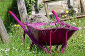 picture of grub  - work in a garden wheelbarrow ready for use  - JPG